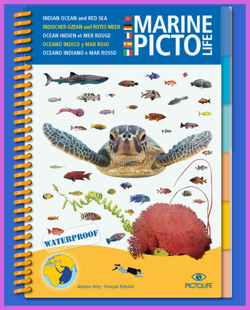 Pictolife Red Sea Guide